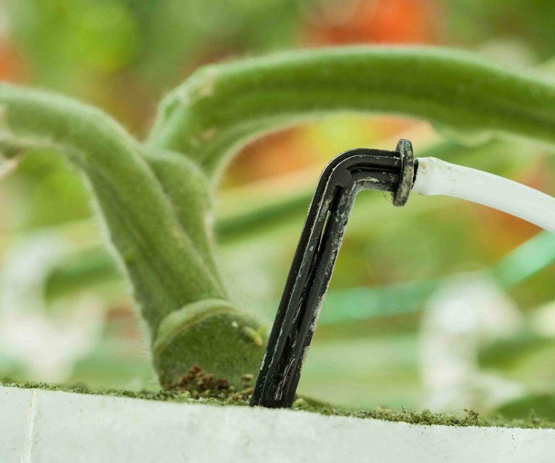 7_1.hortiware_druppelaar-irrigatie